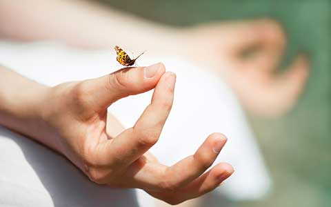 Butterfly sitting on the thumb of a meditating person